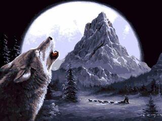Gaira Wolf M1598