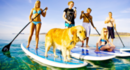 6 reasons to start Paddleboarding